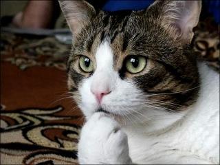 Вахтёрам (Бумбокс) - импровизация (видео про котов),df[nthfv,df[n`hfv, видео про котов, коты, кошки, котята,,ev,jrc